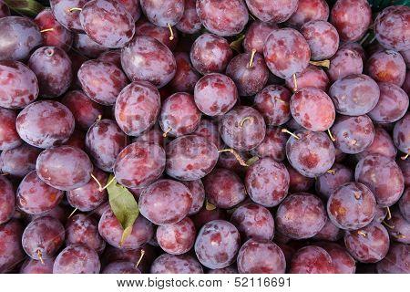Indigo-color plum fruits