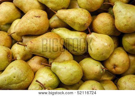 Pear harvest season