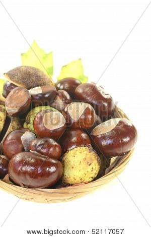 Brown Horse Chestnuts In A Basket