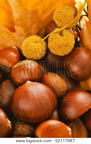 a pile of chestnuts and autumn leaves