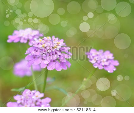 Wonderful Pink Flowers On Blurred Green Background