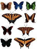 collection of different butterfly for design. Vector illustration poster