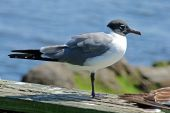 A sea gull waits on a dock looking for food. poster