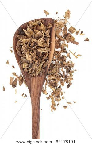 Yellow dock root herb used in herbal medicine in an olive wood spoon over white background. Rumex crispus. poster