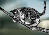 illustration of domestic cat on branch with blurred background poster