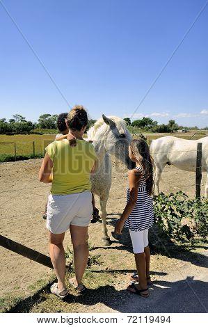Tourists Who Discover Camargue Horses