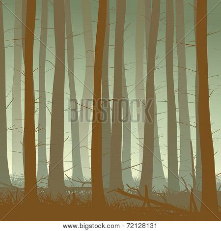 Square Illustration Of Misty Coniferous Forest.
