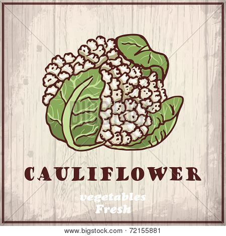 Fresh vegetables sketch background. Vintage hand drawing illustration of a cauliflower