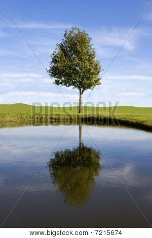 Tree_reflection
