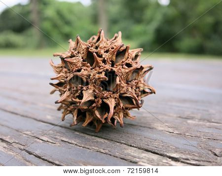American sweetgum fruit on a picnic table
