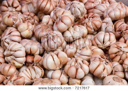 Lots Of Ripe Garlic