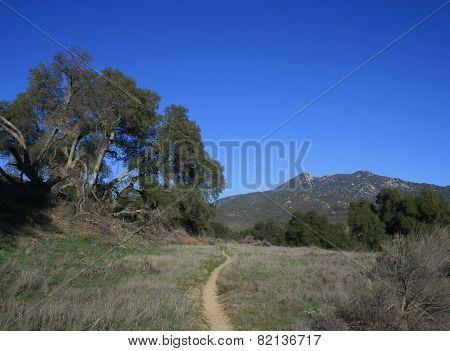 Oak along the Pacific Crest Trail