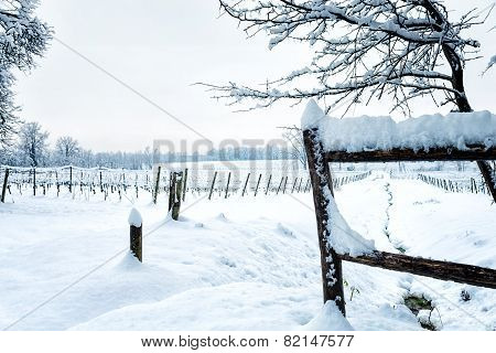 Snow On The Vineyard