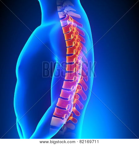 Thoracic Spine Anatomy Pain Concept