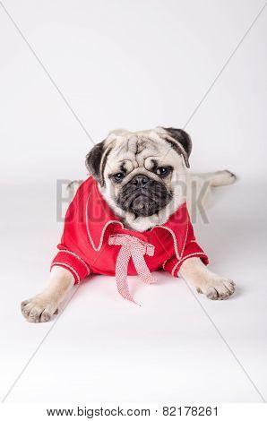 Elegant Dog Dress