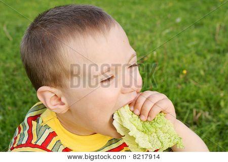 The boy hungrily eats lettuce