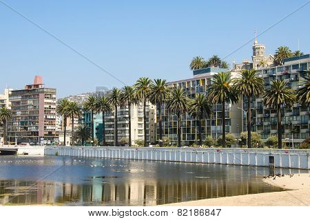 Wulff Castle And Palmtrees In The Center Of Vina Del Mar, Chile