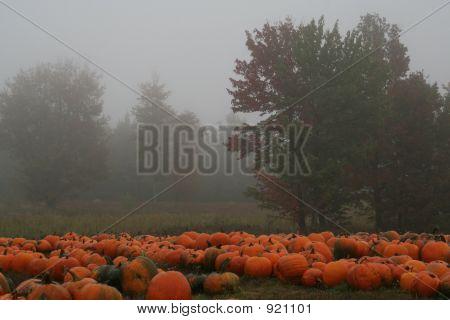 Acadia Pumpkins 4