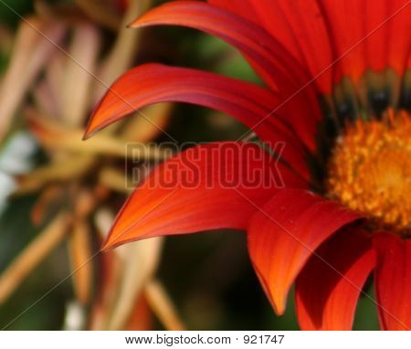 Deep Orange Beauty