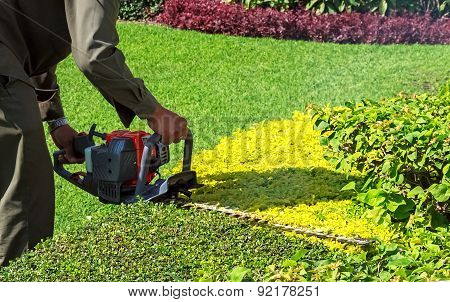 A Man Trimming Shrub With Hedge Trimmer, Closeup