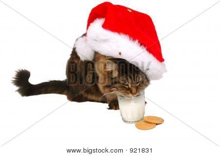 Happy Santa Cat 2