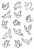 Outline graceful dove and pigeon birds set in sketch style for peace, religion or freedom concept design poster
