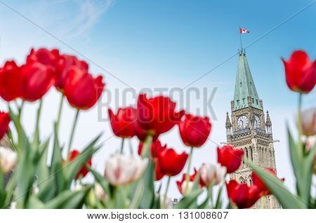 The Peace Tower of the Parliament of Canada with red blurred tulips in the foreground in Ottawa during Canadian Tulip Festival (2016)