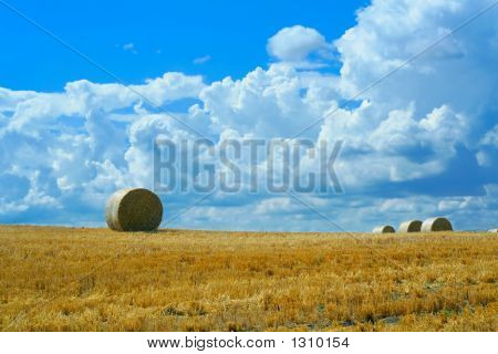 Reaped Wheat Field