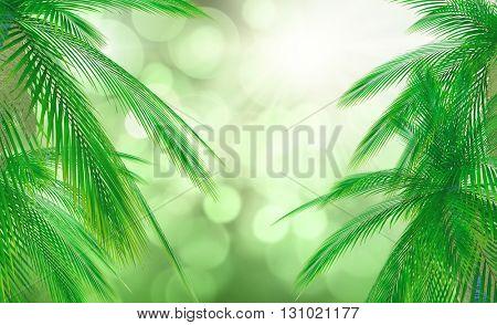 3D render of palm tree leaves against a defocussed background