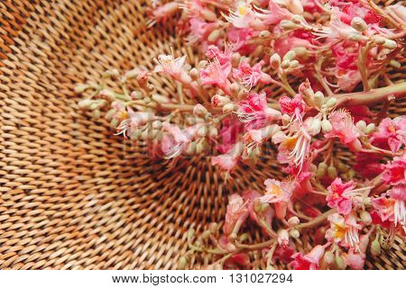 The Pink  Branche of Chestnut Tree in the Braided Basket,Selective Focus,Background,Toned