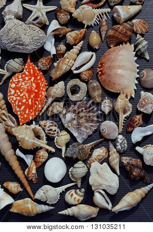 a lot of seashells on setout together with crab, asian served food
