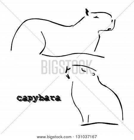 Abstract drawing water rodent on white background. Symbol capybaras. Vector poster