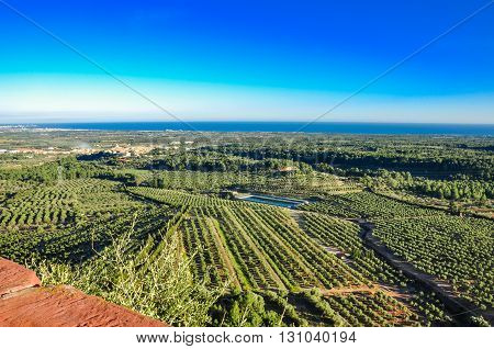 Aerial view of olive groves with sea on the horizon. Typical countryside of Mediterranean seaboard. Mont-Roig del Camp Catalonia (Spain).