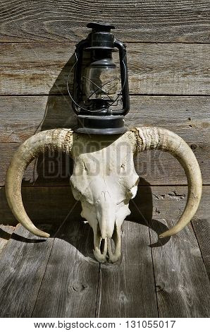 An old gas lantern rests atop of a skull head of a beef bull which also includes the horns.