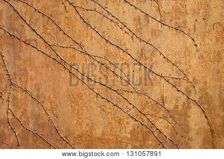 Close up of rust stained cement wall with vines