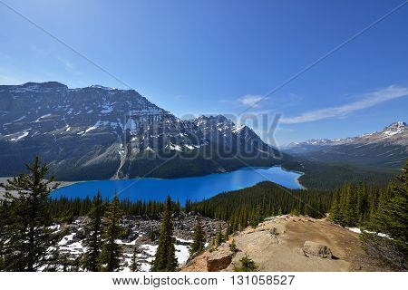 Sapphire Blue Colored Peyto Lake, Banff