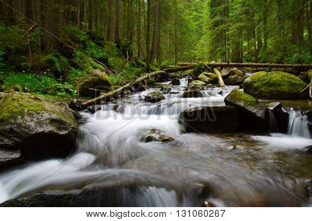 Mountain river flowing through the green forest. Stream in the wood.