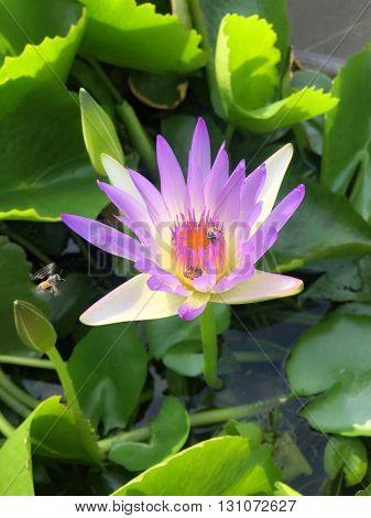 Purple lotus front office in office rayong