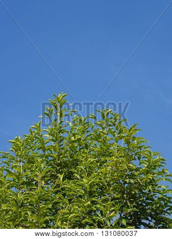 green leaf tree with blue sky background