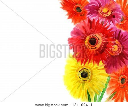 summer watercolor colored gerbera daisies on a white background
