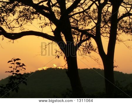 Evening Beauty