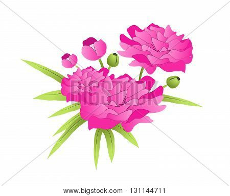 Beautiful modern illustration of pink peony with leaves