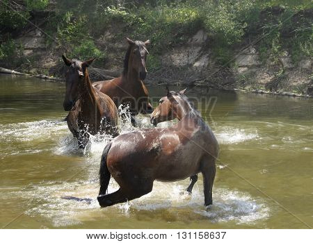 wild horses in the water play catch-up