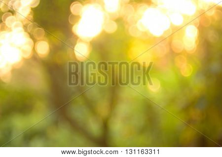 Nature Autumn Leaf Abstract Background.
