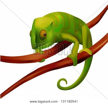 green smooth chameleon sitting on a brown branch