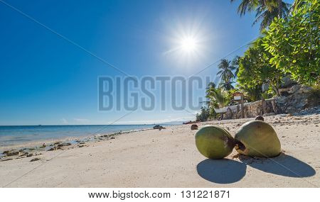 View of Coconuts at Anda beach Bohol island with coconut palms tree leafs, blue sky and turquoise sea water, Travel Vacation