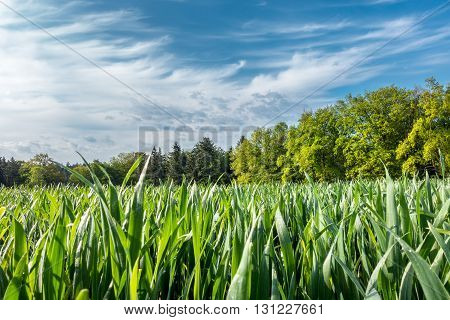Spring Countryside With Field, Forest And Blue Sky