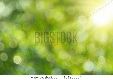 Nature Bokeh Sun Light Background.