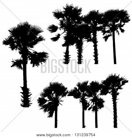 Set of silhouette palm trees 0n white background,vector