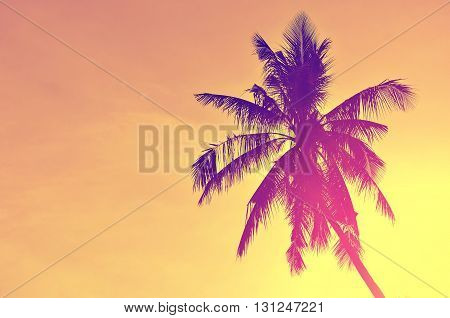 Palm Tree On Blue Sky Background.